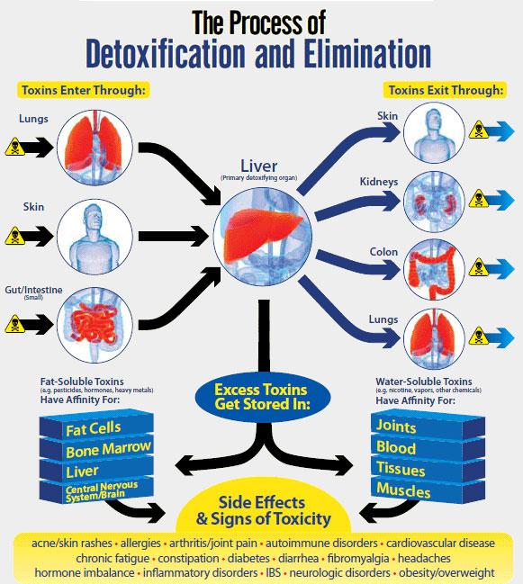 The incredible benefits of detoxing your liver detoxforlifez liver detox ccuart Gallery